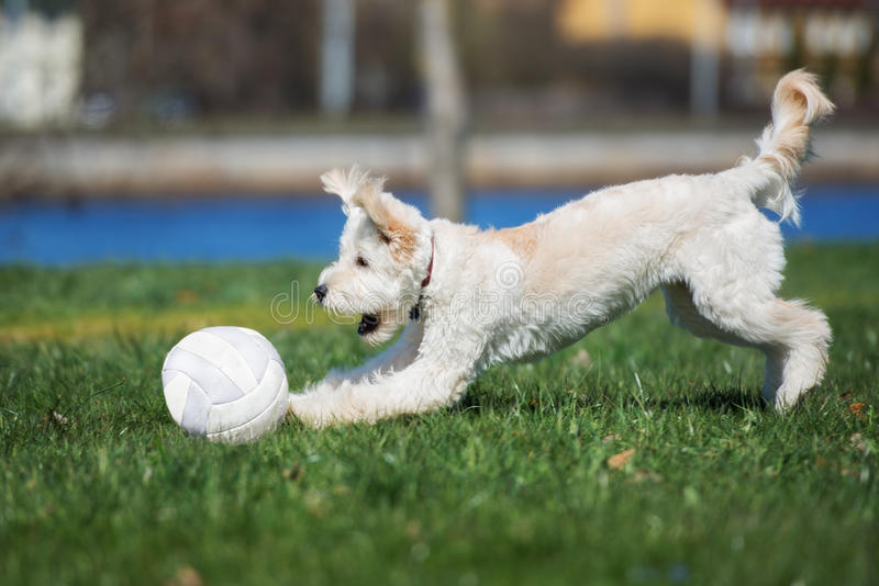 Förtjusande blandad avelhund som spelar med en boll utomhus royaltyfria foton