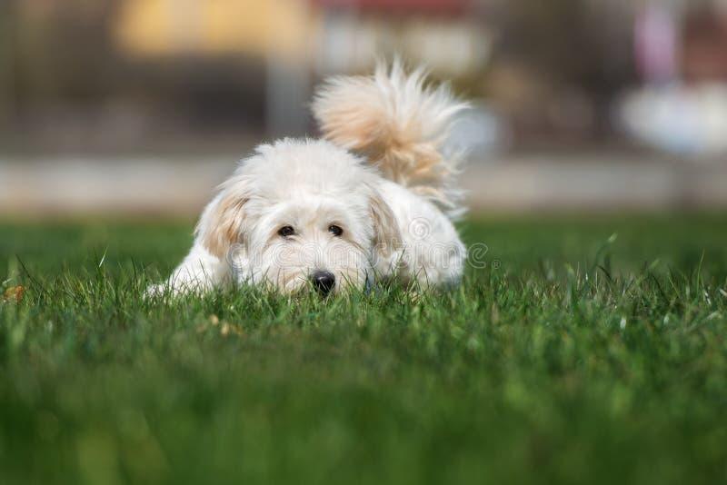 Förtjusande blandad avelhund som utomhus poserar royaltyfria bilder
