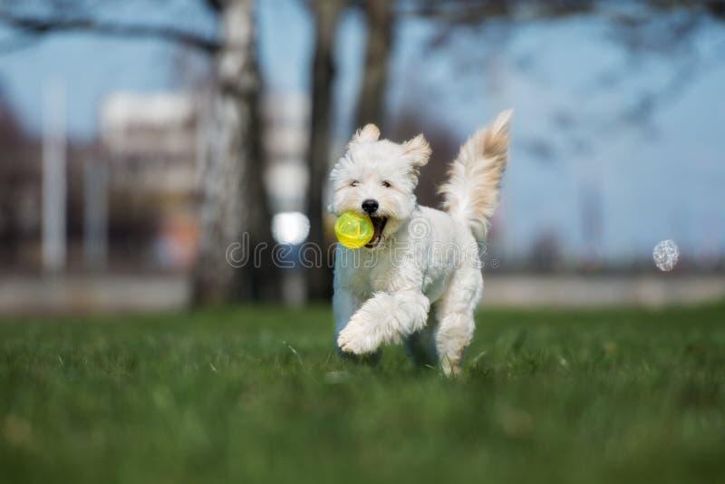 Förtjusande blandad rinnande avelhund utomhus fotografering för bildbyråer