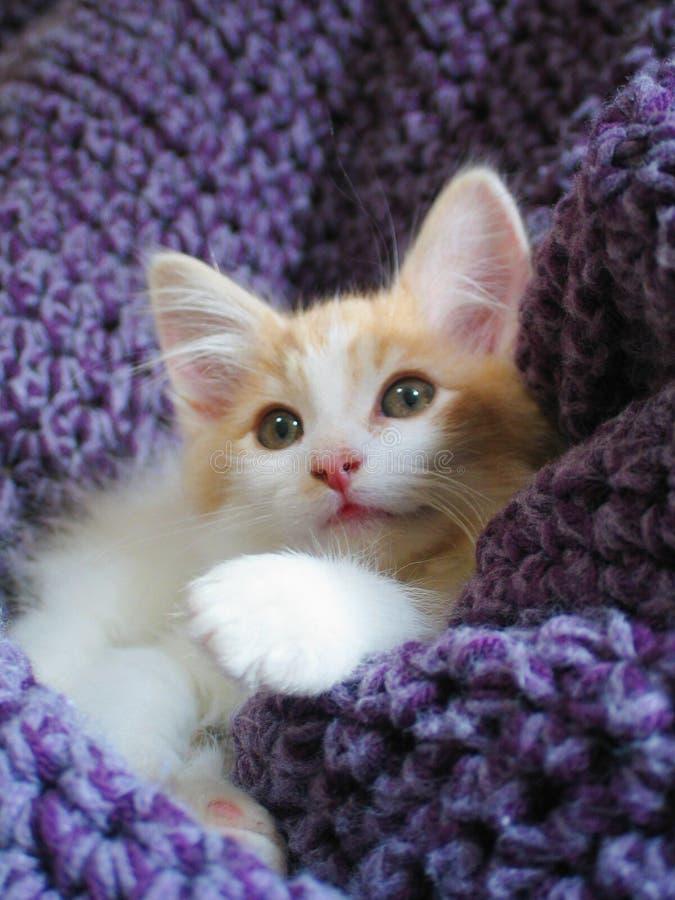förtjusande en annan kattunge arkivfoto