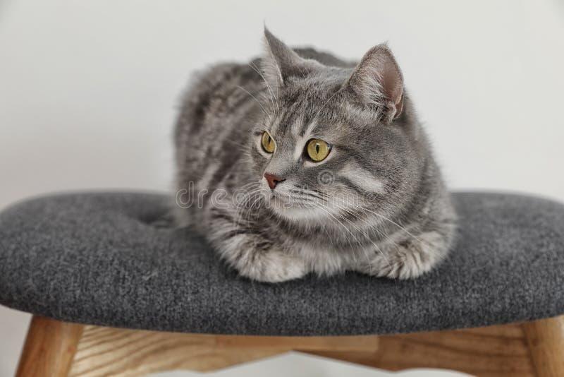 Förtjusande grå strimmig kattkatt på stol royaltyfri foto