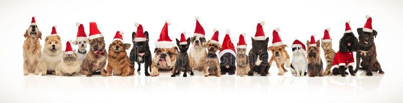 Förtjusande grupp av många julhusdjur som bär santa hattar fotografering för bildbyråer
