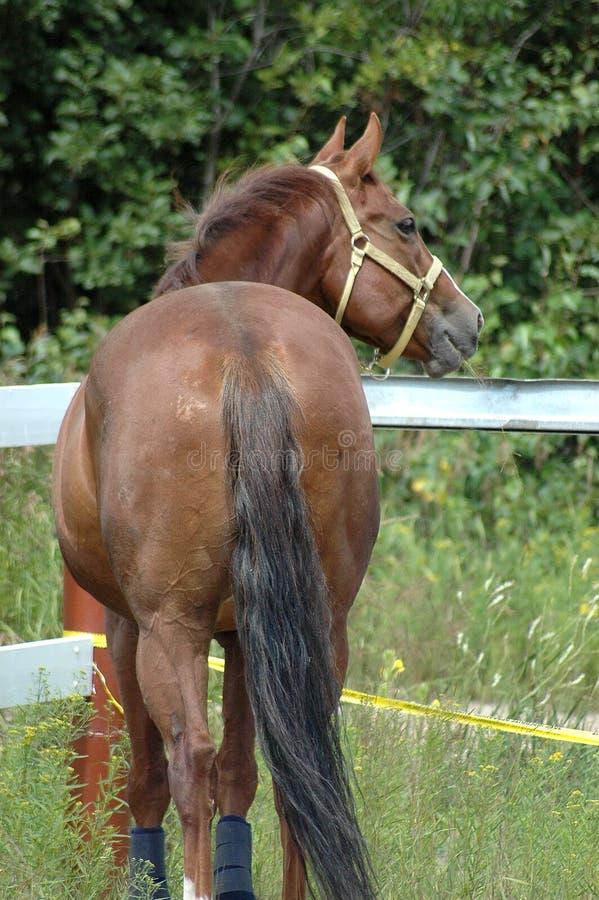 förtjusande häst fotografering för bildbyråer