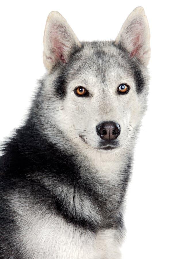 förtjusande hund royaltyfria bilder