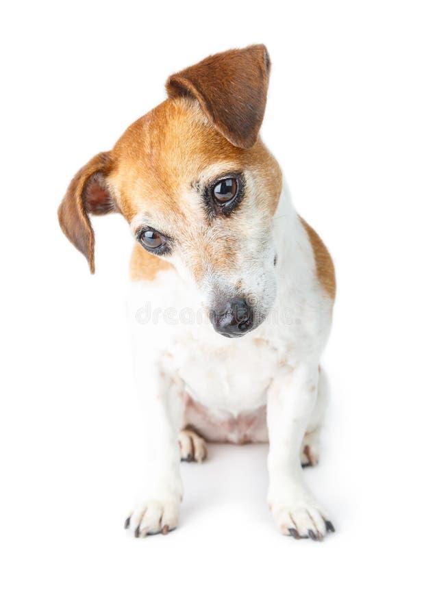 Förtjusande hundstående royaltyfria bilder