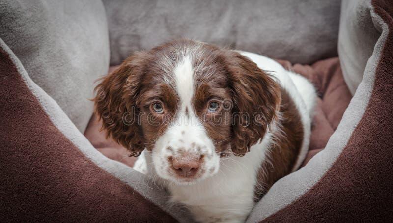 förtjusande hundvalp royaltyfri fotografi