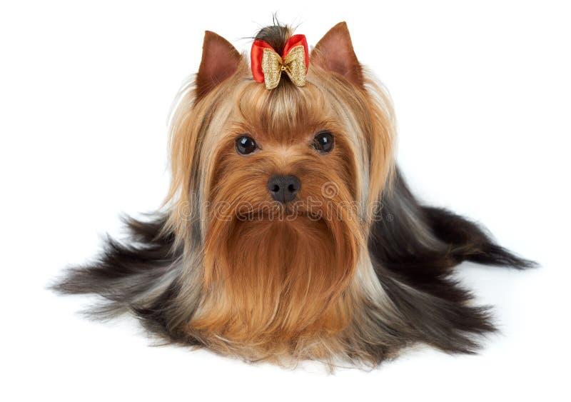 förtjusande husdjur arkivfoto