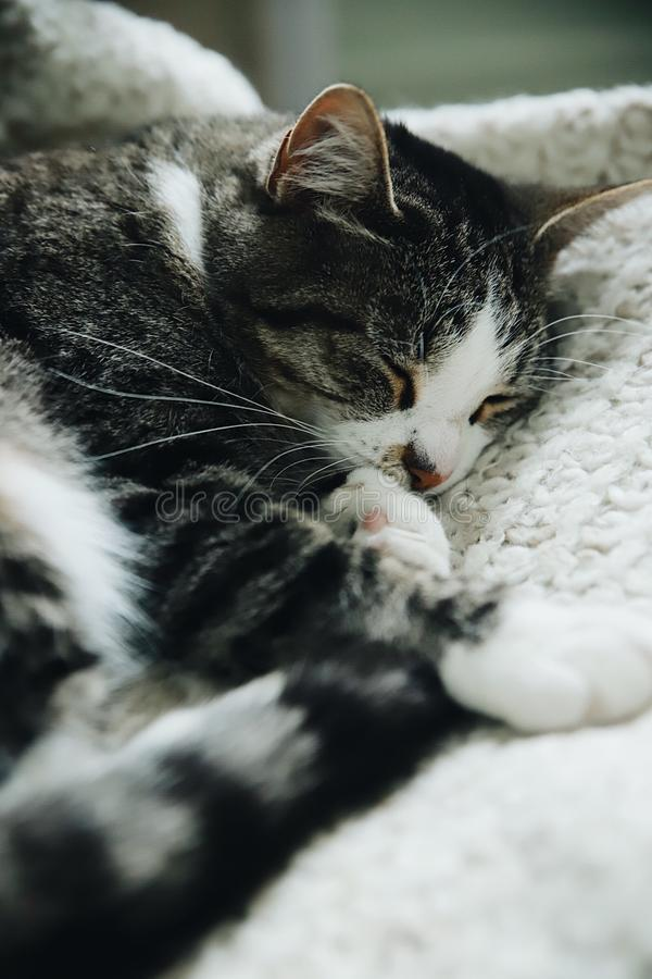 förtjusande katt royaltyfri bild