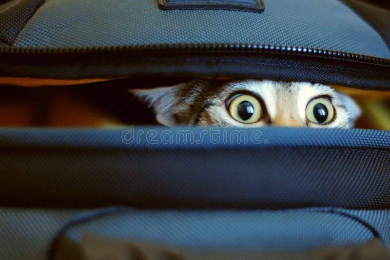 Förtjusande katt som kikar ut ur påse royaltyfri bild