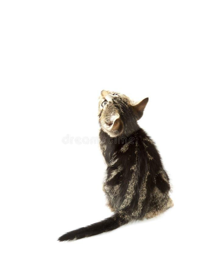 förtjusande kattunge royaltyfri fotografi