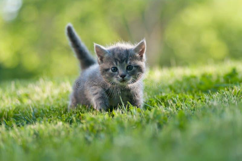 Förtjusande kattunge i trädgården royaltyfria bilder