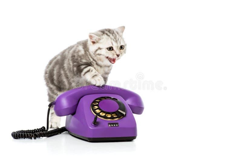 förtjusande kattunge på den purpurfärgade roterande telefonen på vit royaltyfri fotografi