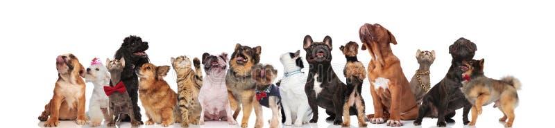 Förtjusande lag av hundkapplöpning och katter av olika avel royaltyfri fotografi