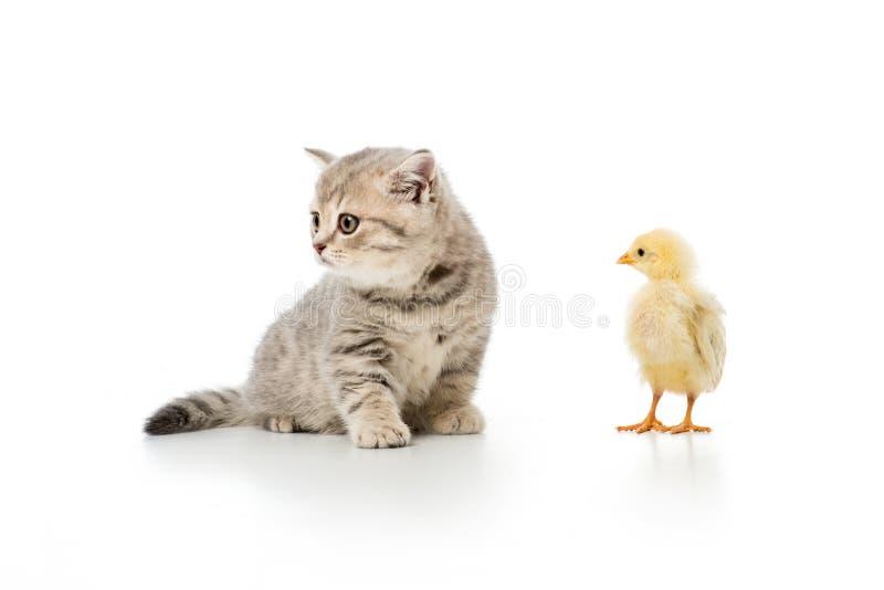 förtjusande liten fågelunge och gullig päls- kattunge arkivfoto