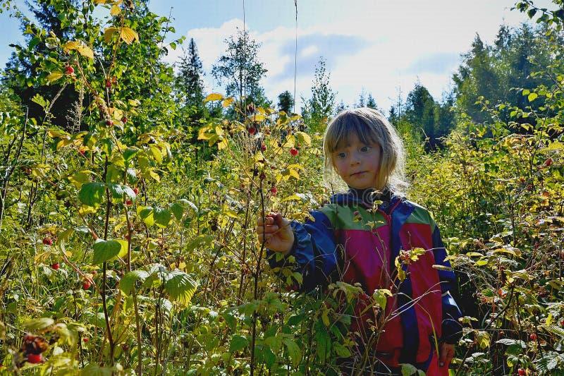 Förtjusande liten flicka som fotvandrar i skogen på sommardag fotografering för bildbyråer