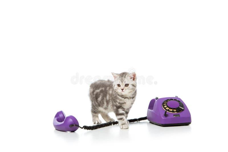 förtjusande liten kattunge med den purpurfärgade roterande telefonen på vit royaltyfria foton