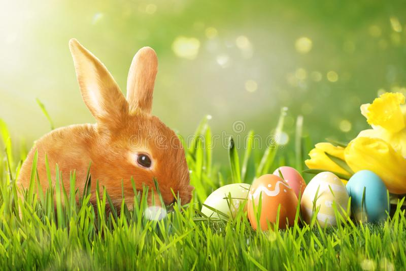 Förtjusande påskkanin och färgrika ägg på grönt gräs royaltyfria bilder