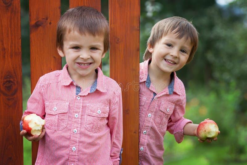 Förtjusande pojkar i röda skjortor, hållande äpplen som ler fotografering för bildbyråer