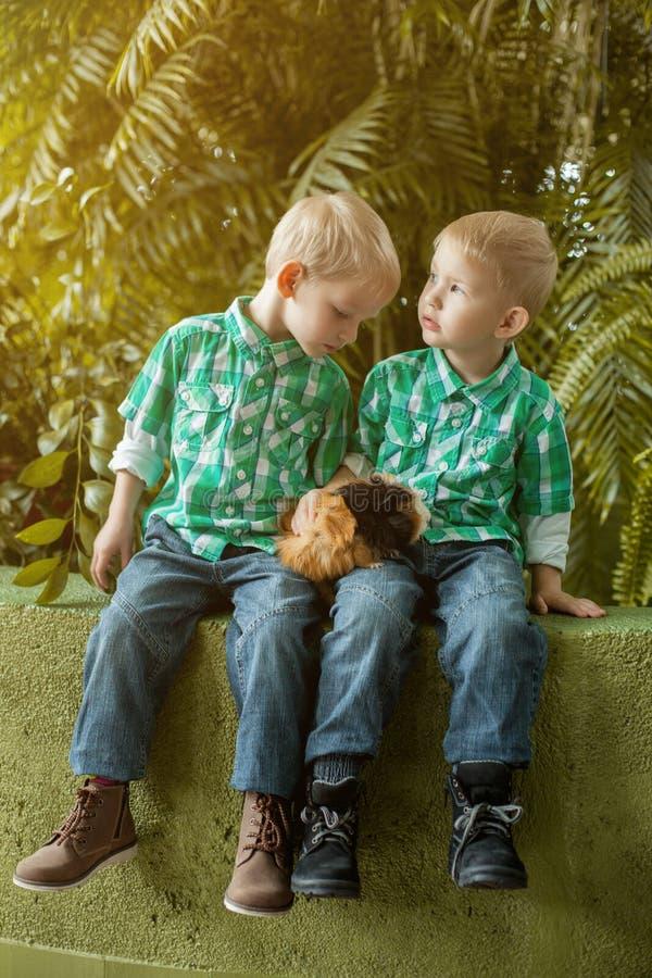 Förtjusande små tvilling- bröder som poserar med cavyen arkivbilder