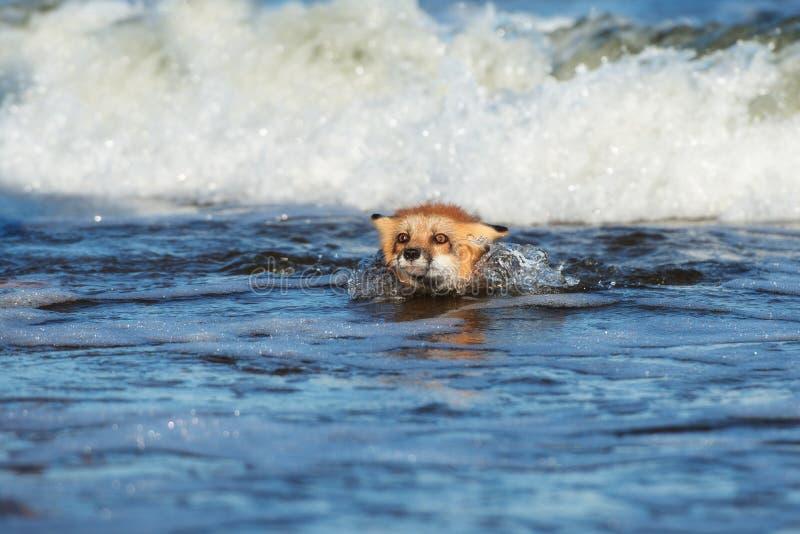 Förtjusande ung simning i havet royaltyfria bilder