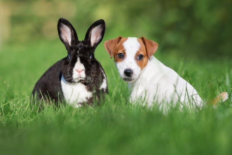Förtjusande valp och kanin som utomhus poserar i sommar fotografering för bildbyråer
