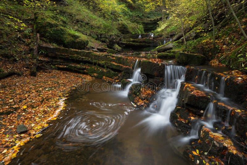 Download Förtrollad skog arkivfoto. Bild av leaf, liggande, exponering - 76701632