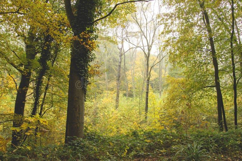 Förtrollad skog i höst royaltyfria foton