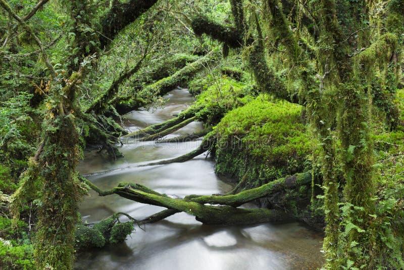 Förtrollad skog, Queulat nationalpark, Chile royaltyfri foto