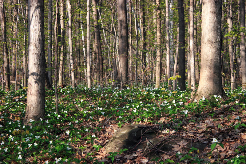 förtrollad skogfjäder fotografering för bildbyråer