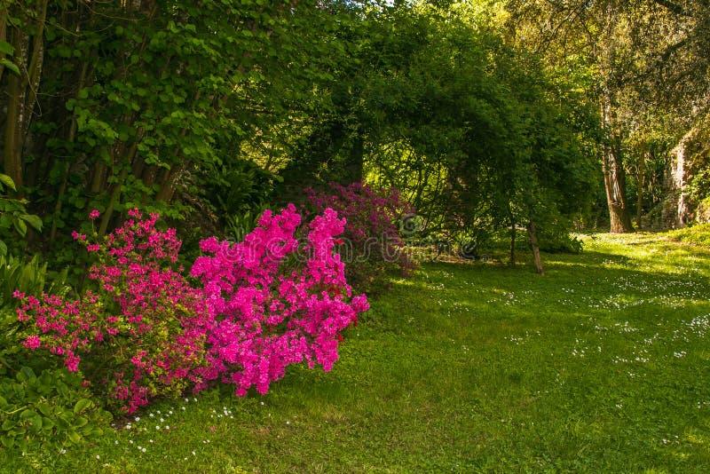 Förtrollad trädgård med blommor arkivbild