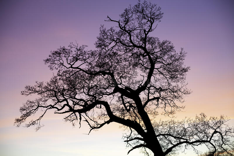 Förtrollad trädkontur mot rosa himmel på solnedgången royaltyfri bild