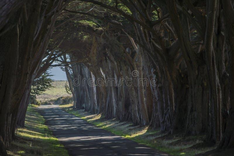 Förtrollade Forest Road arkivfoto