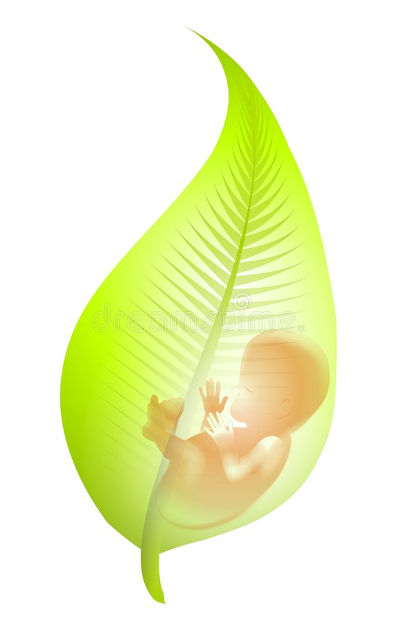 Fötus im grünen Blatt lizenzfreie abbildung