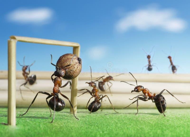 Fútbol del juego de las hormigas, balompié micro fotos de archivo libres de regalías
