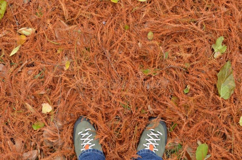 Füße, die unter rostigem Laub des Herbstes, Draufsicht stehen lizenzfreie stockfotografie