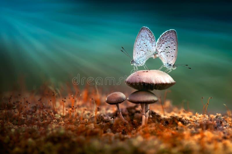 Fügende Schmetterlinge lizenzfreie stockfotos