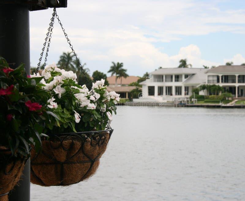 Führen der Blumen lizenzfreies stockfoto