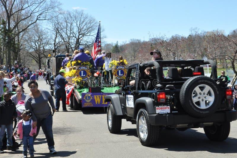 Führen Sie am 37. jährlichen Narzissen-Festival in Meriden, Connecticut vor lizenzfreie stockbilder