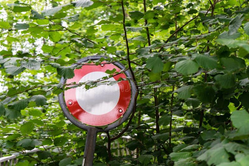 Führen Sie Stoppschild im Wald, der nicht durch Bäume überwältigt wird lizenzfreies stockbild