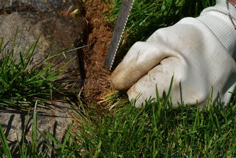 Führen Sie von der Gartenarbeit - eine Frau einzeln auf, die ihren Garten kultiviert und säubert stockbilder