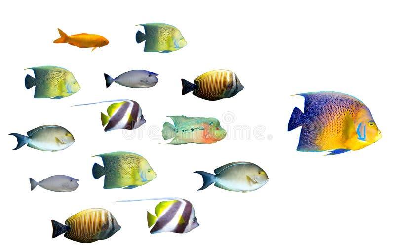 Führungkonzept - große Fischführung stockbild