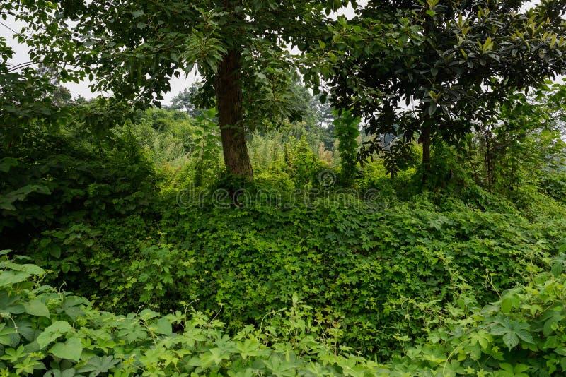Fülle von fruchtbaren Anlagen im sonnigen Sommer lizenzfreie stockbilder