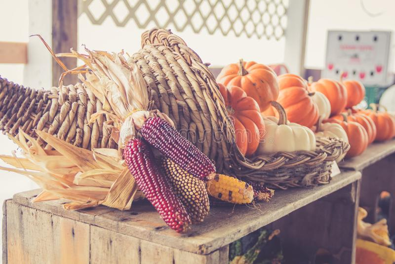 Fülle von Kürbisen im Korb am Landwirt ` s Markt für Fallernte stockbilder