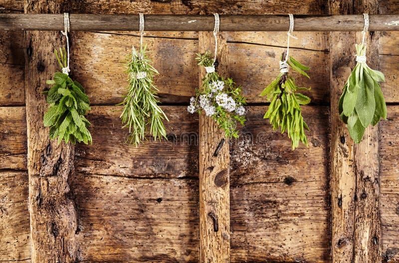 Fünf Bündel der sortierten frischen Kräuter, die oben hängen stockfoto