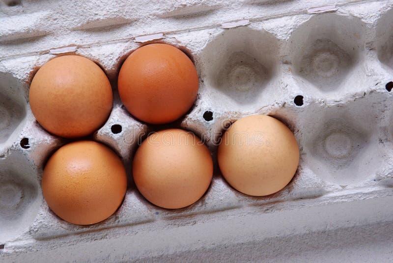 Fünf Eier lizenzfreie stockbilder