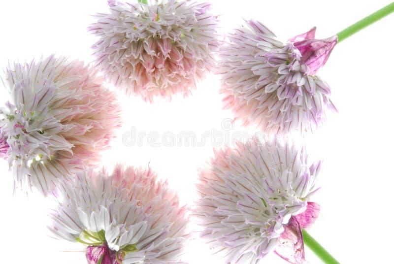 Fünf hübsche Blumen stockbild