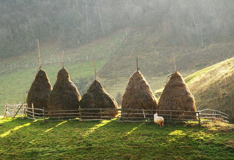 Fünf Heuschober in einer Einschließung in Karpaten stockbild