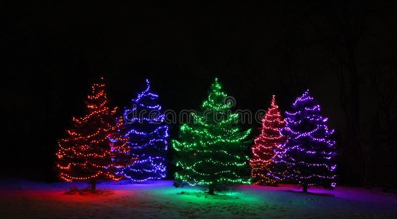 Fünf immergrüne Bäume bedeckt mit Lichtern stockfoto