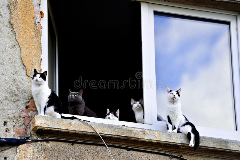 Fünf Katzen auf Fensterbrett lizenzfreie stockfotos
