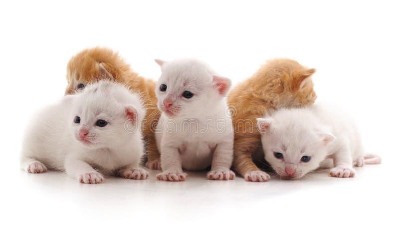Fünf kleine Katzen stockbild